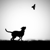 The Clue Photographic Print by Hengki Lee