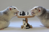 Playing Chess! Photographic Print by Ellen Van