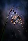 Under the Summer Rain Photographic Print by Antonio Grambone