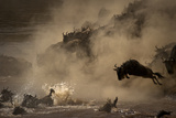 The Great Wildebeest Migration Fotografisk tryk af Adrian Wray