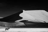 The Solitary Fotografisk trykk av Mathilde Guillemot