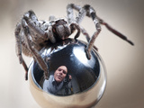 Self-Portrait with Spider Photographic Print by Tim Millar