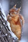 Vinter Fotografisk tryk af Ervin Kobakci