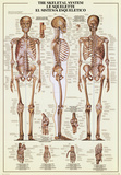 Skeletal System Prints