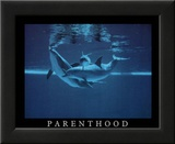 Parenthood Dolphins Art Photo Poster