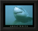 Great White Shark Art Photo Prints