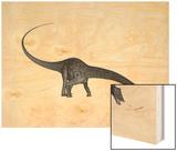 Diplodocus Dinosaur with Head Down Wood Print by Stocktrek Images