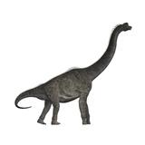 Brachiosaurus Dinosaur Premium Giclee Print by Stocktrek Images