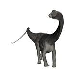 Diplodocus Dinosaur Posters by Stocktrek Images