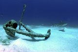 A Caribbean Reef Shark Swimbs by the Anchor at Treasure Wreck Photographic Print by Stocktrek Images