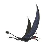 Dorygnathus Pterosaur from the Jurassic Period Stampa di Stocktrek Images