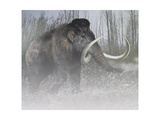 A Woolly Mammoth in Cold Weather of the Pleistocene Epoch Prints by Stocktrek Images