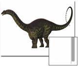 Apatosaurus Dinosaur Posters by Stocktrek Images