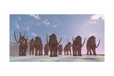 A Herd of Columbian Mammoths Migrate to a Warmer Climate Poster di Stocktrek Images