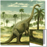Apatosaurus Feeding on the Leaves of a Tree Posters by Stocktrek Images