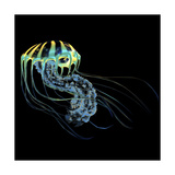 A Bioluminescent Jellyfish Prints by Stocktrek Images