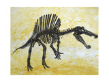 Spinosaurus Dinosaur Skeleton Poster di Stocktrek Images