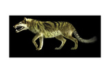 Andrewsarchus Lived During the Eocene Epoch of Mongolia Print by Stocktrek Images
