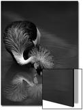 The Reflection Poster av  C.S.Tjandra