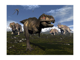 Tyrannosaurus Rex Attacked by Three Triceratops Posters by Stocktrek Images