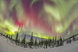 Aurora Borealis over Churchill, Manitoba, Canada Photographic Print by Stocktrek Images