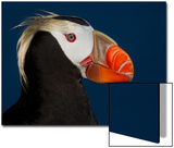 Tufted Puffin Posters by Alfred Forns