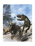 Ankylosaurus Hits Tyrannosaurus Rex with it's Clubbed Tail in Self-Defense Posters by Stocktrek Images