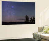 Sirius and Canis Major Rising in New Mexico Wall Mural by Stocktrek Images