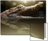 Croc Art by Fahmi Bhs