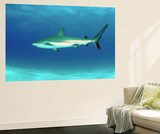 Caribbean Reef Shark, Nassau, the Bahamas Wall Mural by Stocktrek Images