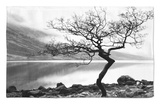Solitary Tree on the Shore of Loch Etive, Highlands, Scotland, UK Rug by Nadia Isakova