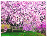 Wooden Bench under Cherry Blossom Tree in Winterthur Gardens, Wilmington, Delaware, Usa Fleece Blanket by Jay O'brien