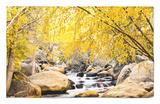 Fall Foliage at Creek, Eastern Sierra Foothills, California, USA Alfombrilla por Tom Norring