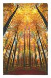 Catedral de otoño Alfombrilla por Philippe Sainte-Laudy