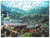 Madreporic Formation at Sipadan Island with Thousands of Little Chromis and Pseudanthias Fishes Fleece Blanket by Andrea Ferrari