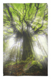 Ponthus Beech Tree 2 Rug by Philippe Manguin