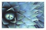 Pattern in Agave Cactus Alfombrilla por Adam Jones