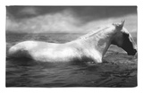 White Horse Swimming Rug by Tim Lynch