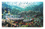 Madreporic Formation at Sipadan Island with Thousands of Little Chromis and Pseudanthias Fishes Rug by Andrea Ferrari