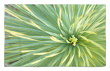 Motion Blur of Yucca Plant at Jc Raulston Arboretum in Raleigh, North Carolina Rug by Melissa Southern