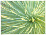 Motion Blur of Yucca Plant at Jc Raulston Arboretum in Raleigh, North Carolina Fleece Blanket by Melissa Southern