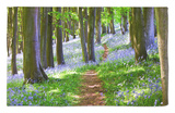 A Walk in the Woods Rug by Doug Chinnery