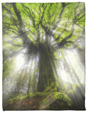 Ponthus Beech Tree 2 Fleece Blanket by Philippe Manguin