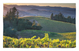 Healdsberg, Sonoma County, California: Vineyard and Winery at Sunset. Rug by Ian Shive