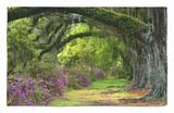 Coast Live Oaks and Azaleas Blossom, Magnolia Plantation, Charleston, South Carolina, Usa Alfombrilla por Adam Jones