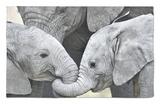 African Elephant Calves (Loxodonta Africana) Holding Trunks, Tanzania Rug