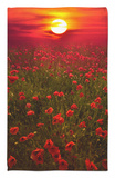 Warm Sunset Rug by Marco Carmassi