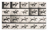 "Jockey on a Galloping Horse, Plate 627 from ""Animal Locomotion,"" 1887 Rug by Eadweard Muybridge"