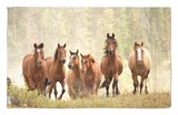 Horses on Ranch in Montana During Roundup Rug by Adam Jones