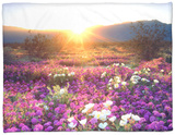 Sand Verbena and Dune Primrose Wildflowers at Sunset, Anza-Borrego Desert State Park, California Fleece Blanket by Christopher Talbot Frank